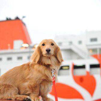 フェリーの旅:愛犬と九州旅行
