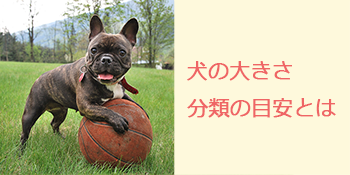 わん旅アドバイス③犬の大きさ分類の目安とは